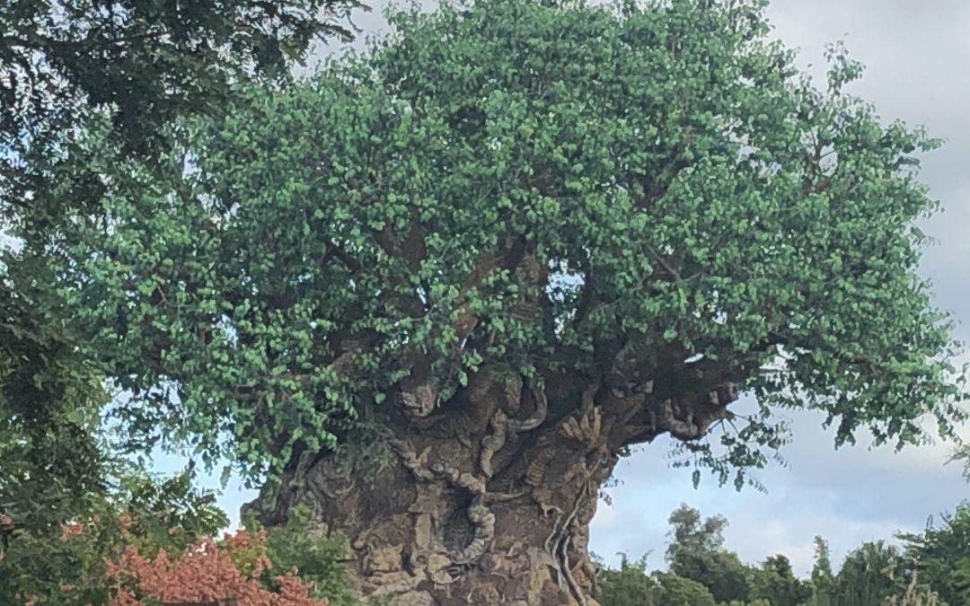 My 5 Favorite Hidden Gems at Disney's Animal Kingdom